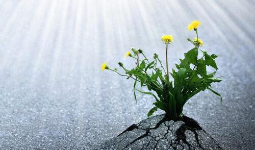 Consejos de resiliencia ante la adversidad