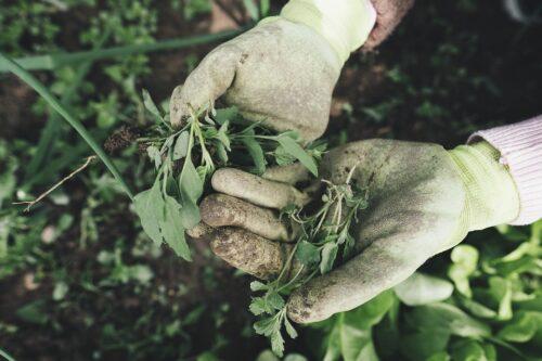 excelentes consejos de jardinería